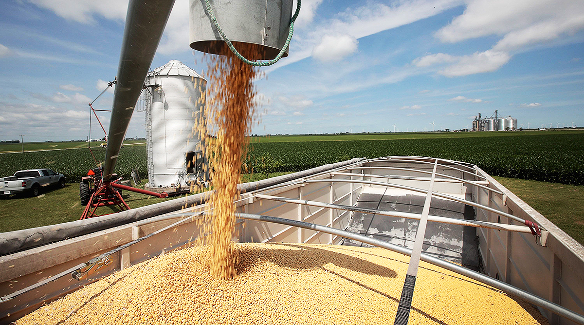 Soybeans are loaded from a grain bin onto a truck