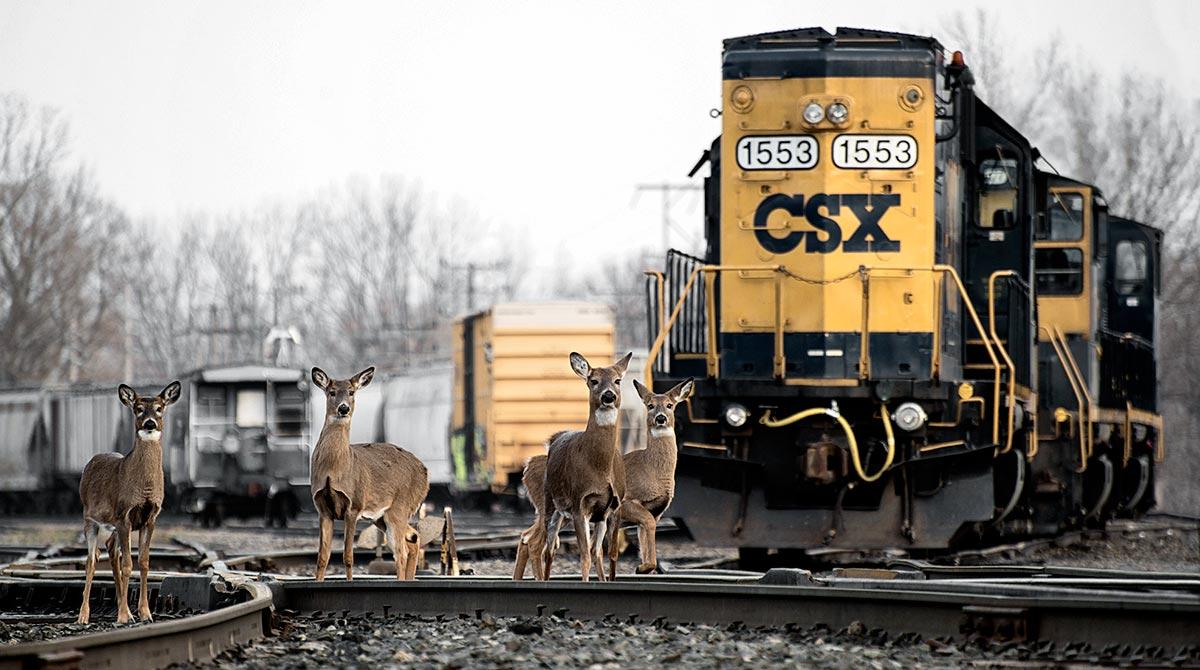 CSX Caught Mid-Revolution by Death of Rail-Legend Harrison
