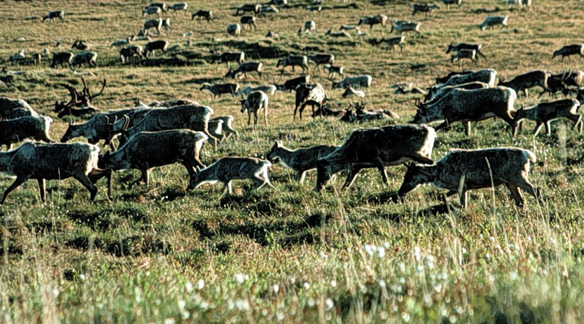 Environmentalists and Alaska natives are challenging the decision to sell drilling rights in ANWR.