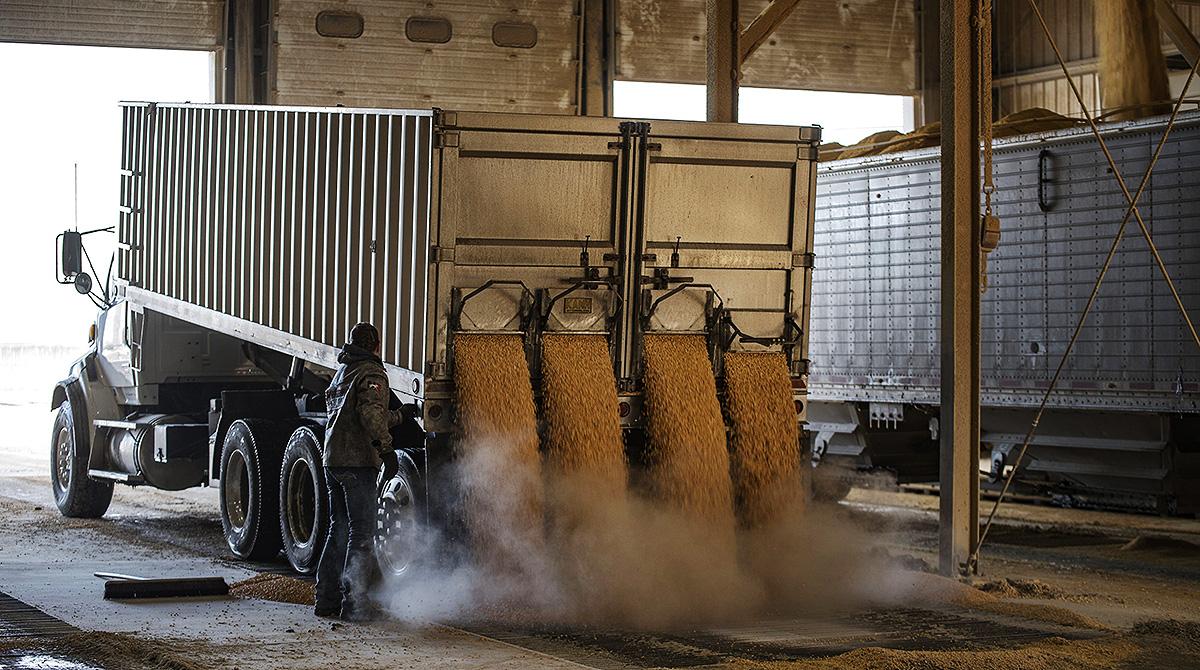 Truck dumps corn for biofuel
