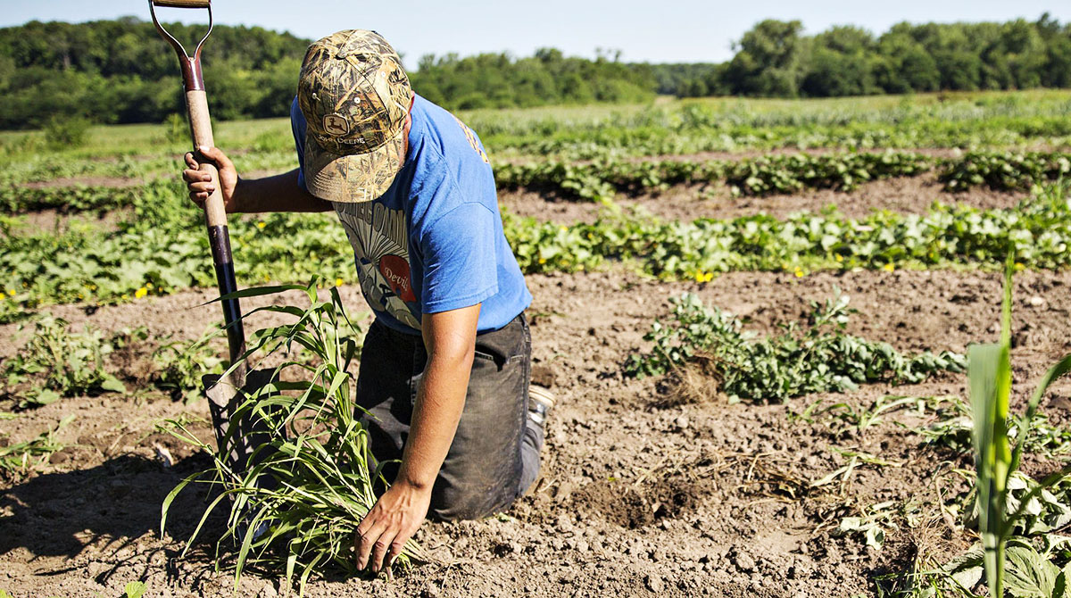 Cargill to Pay Growers for Carbon-Friendly Farming Methods