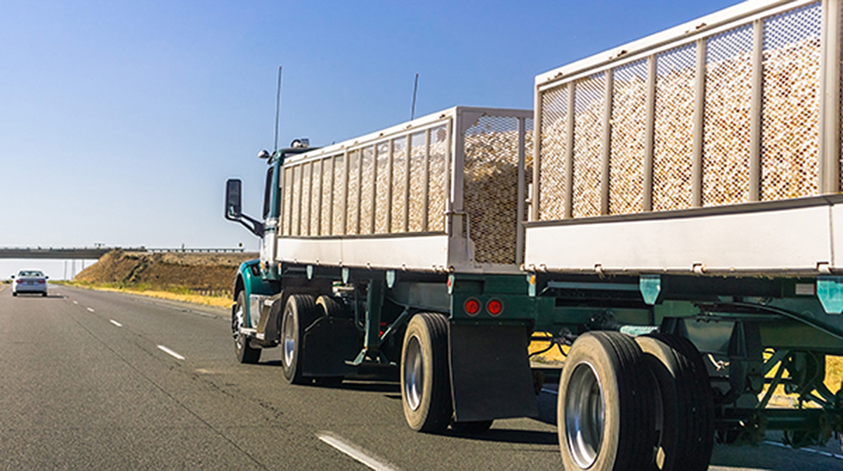 Truck carrying grain