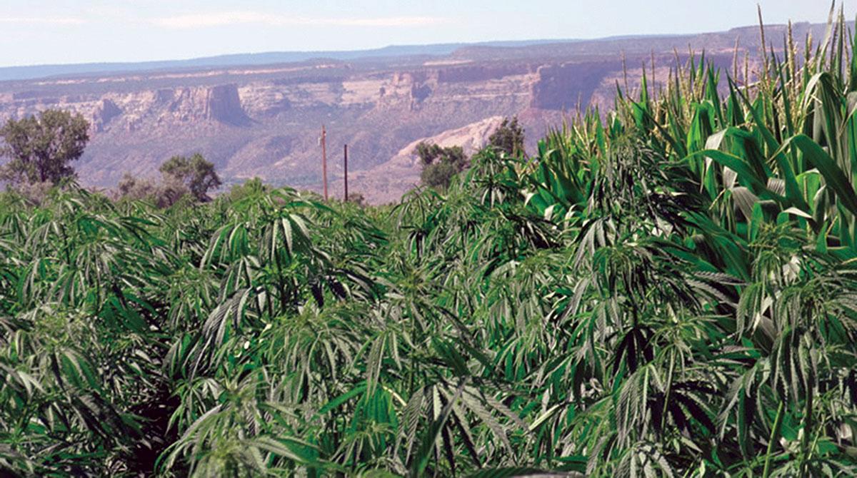 Colorado hemp farm
