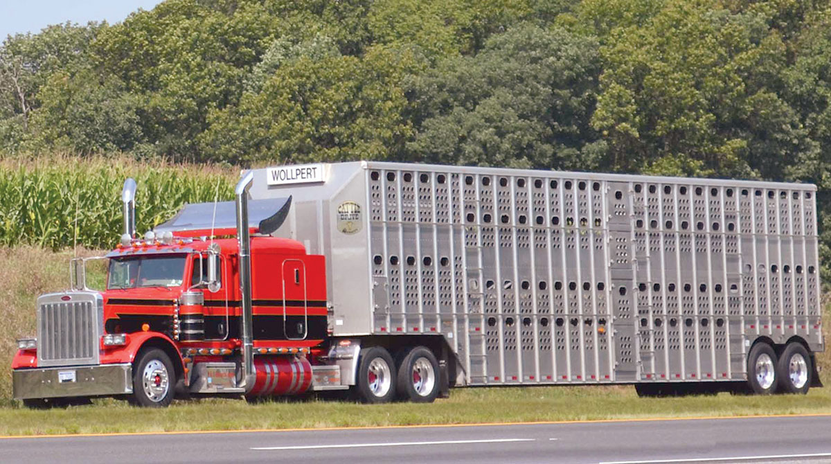 Livestock and cattle-hauling truck