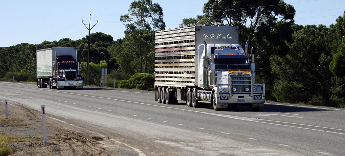 Truck hauls livestock