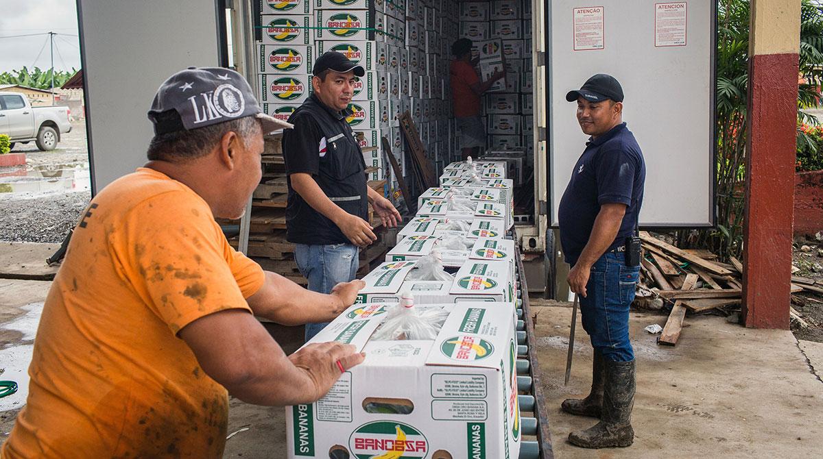 Shipment of bananas loaded