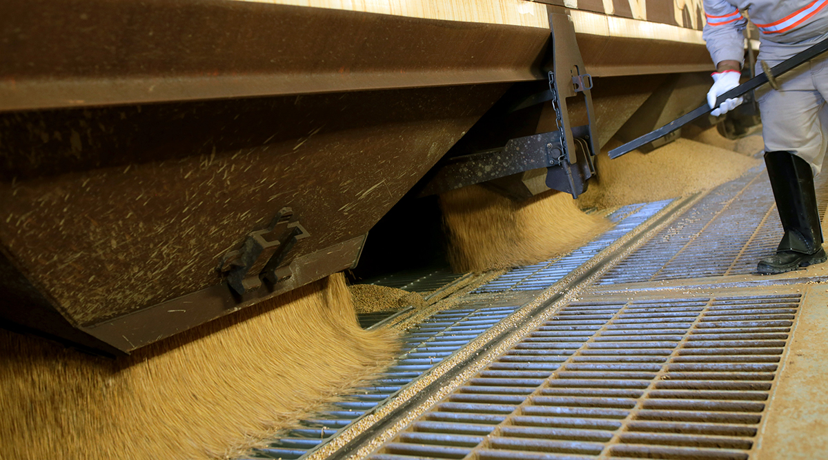 Employee moves soybeans in Brazil