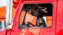 Dog in truck window