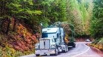 Kenworth Truck Hauling Tree