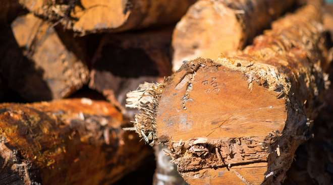 Timber logs stacked at a sawmill in Canada. (James MacDonald/Bloomberg News)