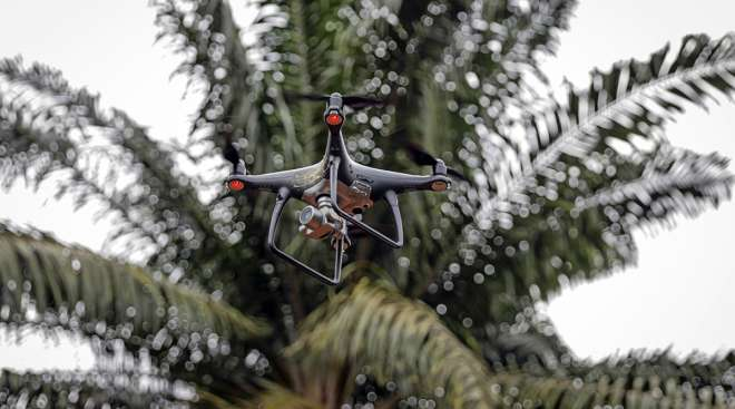 Drone for palm oil