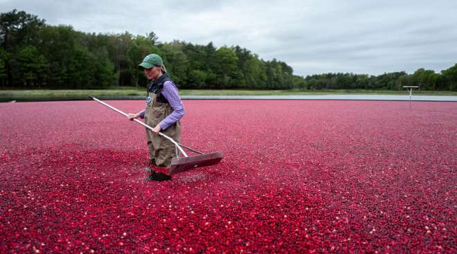 Ocean Spray Partners with Uber Freight