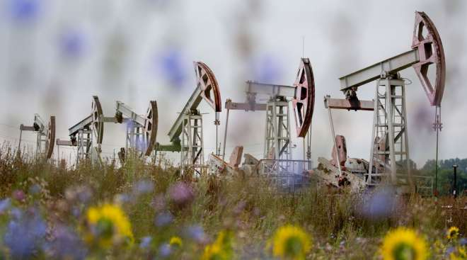 Oil pumping jacks operate in a Russian oilfield on Aug. 16.